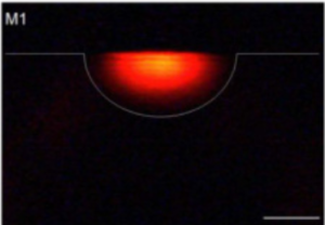 Surface waveguide in PMMA
